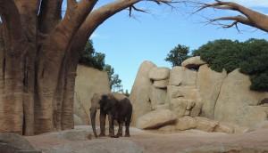 Elefante Bioparc Valencia