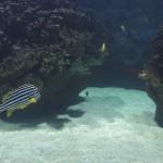 Peces tropicales en Oceanografic