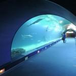 Túnel Oceános